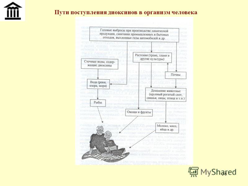 36 Пути поступления диоксинов в организм человека