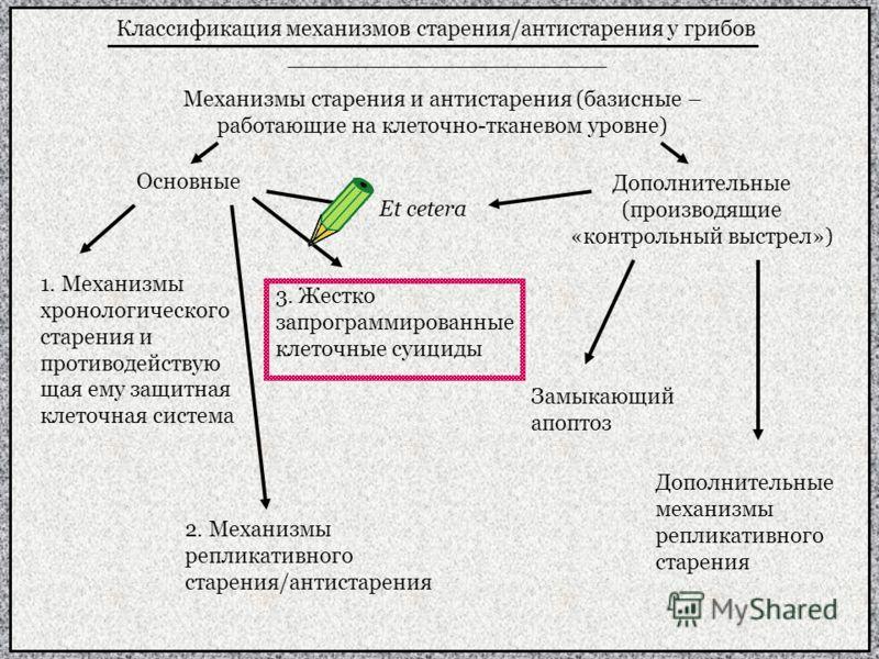 Классификация механизмов старения/антистарения у грибов Механизмы старения и антистарения (базисные – работающие на клеточно-тканевом уровне) Основные Дополнительные (производящие «контрольный выстрел») 1. Механизмы хронологического старения и против