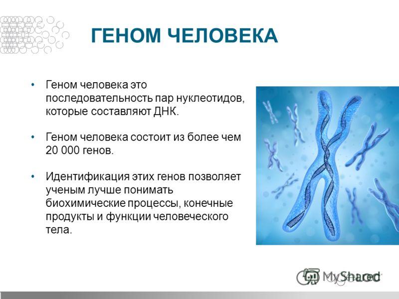Геном человека это последовательность пар нуклеотидов, которые составляют ДНК. Геном человека состоит из более чем 20 000 генов. Идентификация этих генов позволяет ученым лучше понимать биохимические процессы, конечные продукты и функции человеческог