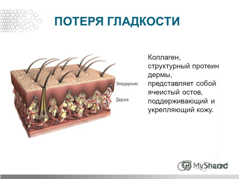 Коллаген, структурный протеин дермы, представляет собой ячеистый остов, поддерживающий и укрепляющий кожу. Дерма Эпидермис ПОТЕРЯ ГЛАДКОСТИ
