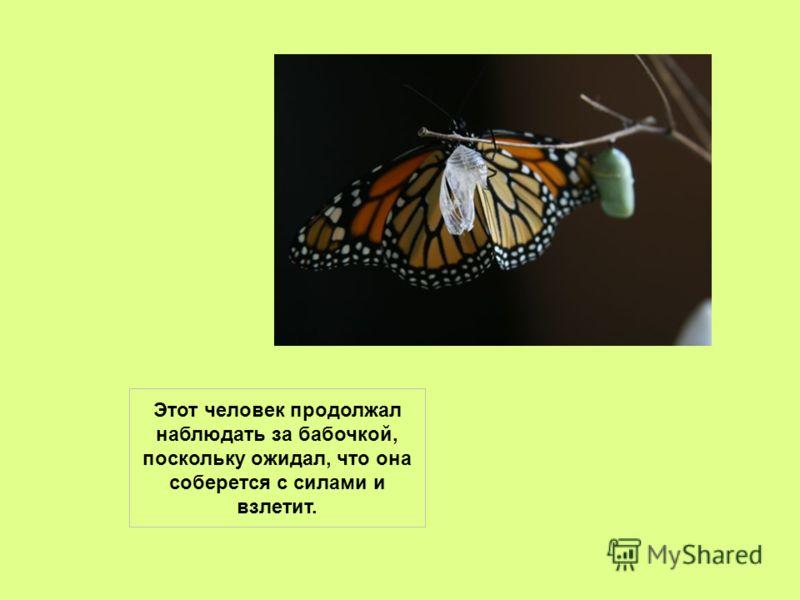 Человек решил помочь бабочке и разрезал кокон ножницами – тогда бабочка легко выбралась наружу. Но тело ее было слабым, крылья – сморщенными.