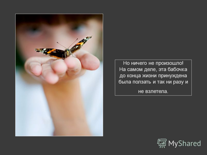 Этот человек продолжал наблюдать за бабочкой, поскольку ожидал, что она соберется с силами и взлетит.