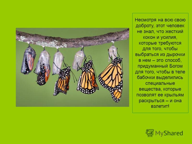Но ничего не произошло! На самом деле, эта бабочка до конца жизни принуждена была ползать и так ни разу и не взлетела.