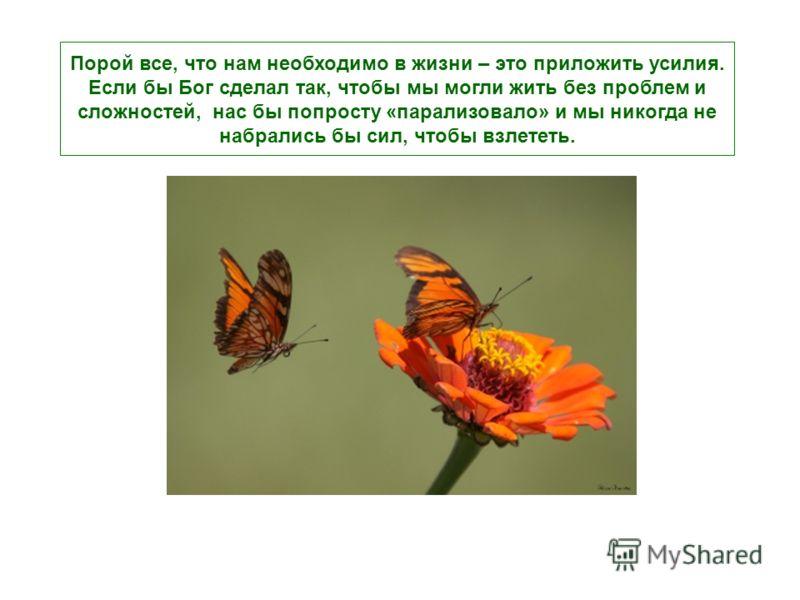 Несмотря на всю свою доброту, этот человек не знал, что жесткий кокон и усилия, которые требуются для того, чтобы выбраться из дырочки в нем – это способ, придуманный Богом для того, чтобы в теле бабочки выделились специальные вещества, которые позво