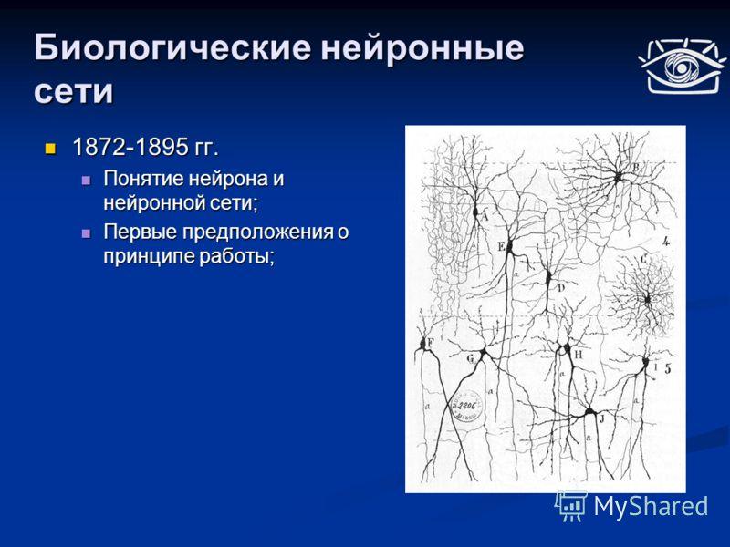 Биологические нейронные сети 1872-1895 гг. 1872-1895 гг. Понятие нейрона и нейронной сети; Понятие нейрона и нейронной сети; Первые предположения о принципе работы; Первые предположения о принципе работы;