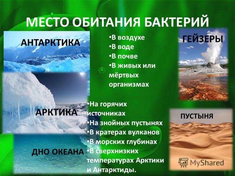 МЕСТО ОБИТАНИЯ БАКТЕРИЙ АНТАРКТИКА ДНО ОКЕАНА АРКТИКА ГЕЙЗЕРЫ В воздухе В воде В почве В живых или мёртвых организмах На горячих источниках На знойных пустынях В кратерах вулканов В морских глубинах В сверхнизких температурах Арктики и Антарктиды. ПУ