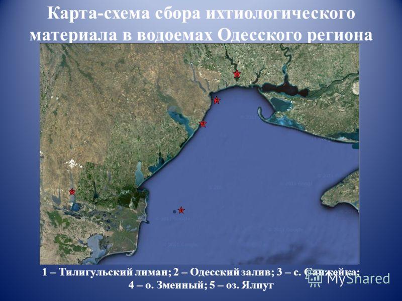 Карта-схема сбора ихтиологического материала в водоемах Одесского региона 1 – Тилигульский лиман; 2 – Одесский залив; 3 – с. Санжейка; 4 – о. Змеиный; 5 – оз. Ялпуг