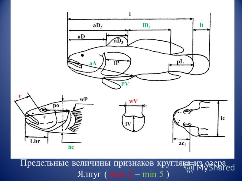 aA PV pL l aD aD 2 r po Lbr hc ic ac 2 c lP aD 3 lD 2 lt wP wV lV Предельные величины признаков кругляка из озера Ялпуг ( max 2 – min 5 )
