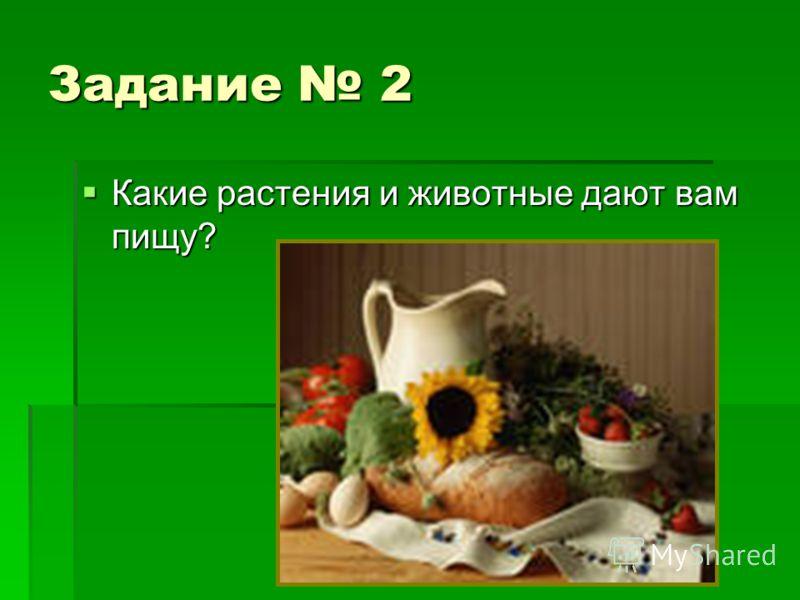 Задание 2 Какие растения и животные дают вам пищу? Какие растения и животные дают вам пищу?