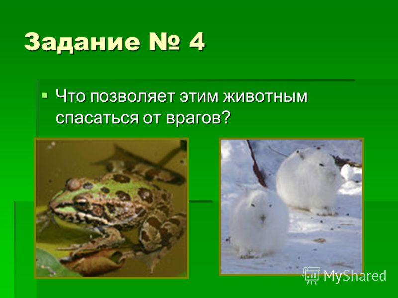 Задание 4 Что позволяет этим животным спасаться от врагов? Что позволяет этим животным спасаться от врагов?