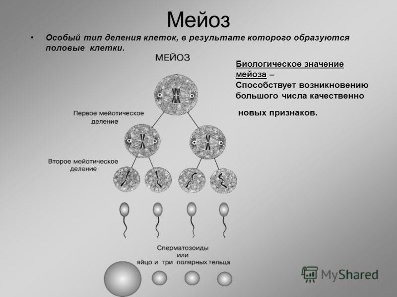 Мейоз Особый тип деления клеток, в результате которого образуются половые клетки. Биологическое значение мейоза – Способствует возникновению большого числа качественно новых признаков.