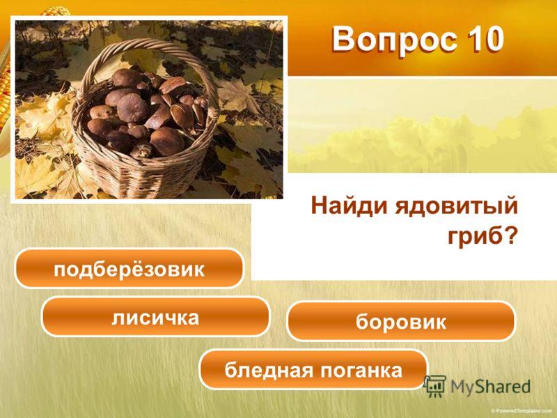 Найди ядовитый гриб? Вопрос 10 подберёзовик лисичка боровик бледная поганка