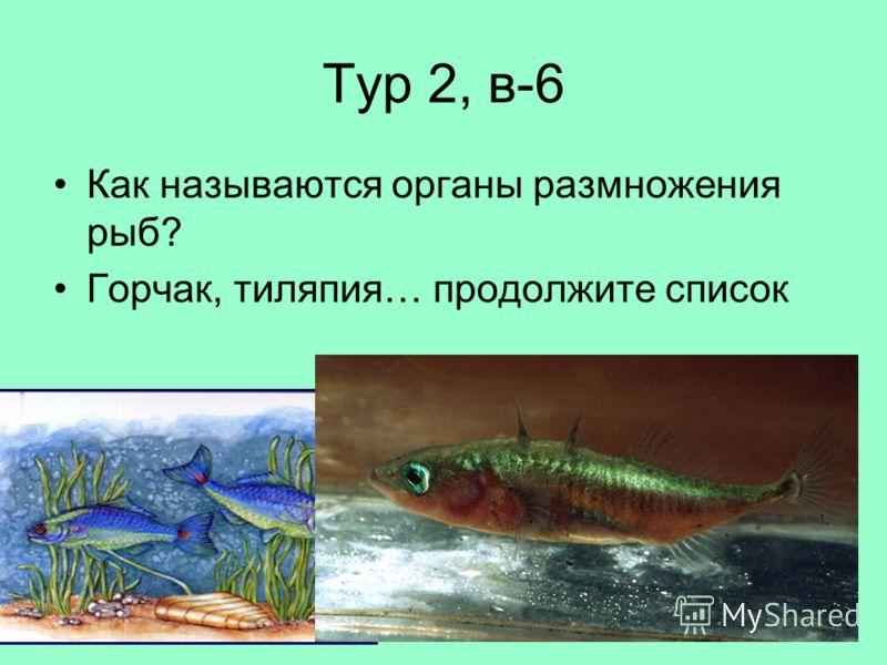 Тур 2, в-6 Как называются органы размножения рыб? Горчак, тиляпия… продолжите список