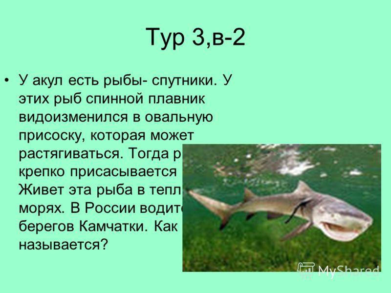 Тур 3,в-2 У акул есть рыбы- спутники. У этих рыб спинной плавник видоизменился в овальную присоску, которая может растягиваться. Тогда рыба крепко присасывается к акуле. Живет эта рыба в теплых морях. В России водится у берегов Камчатки. Как она назы