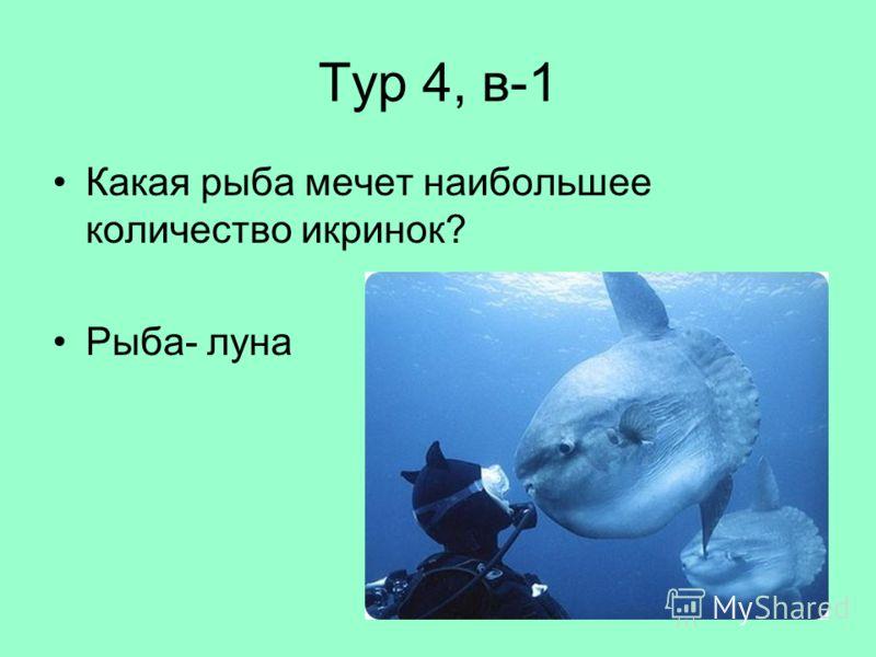 Тур 4, в-1 Какая рыба мечет наибольшее количество икринок? Рыба- луна