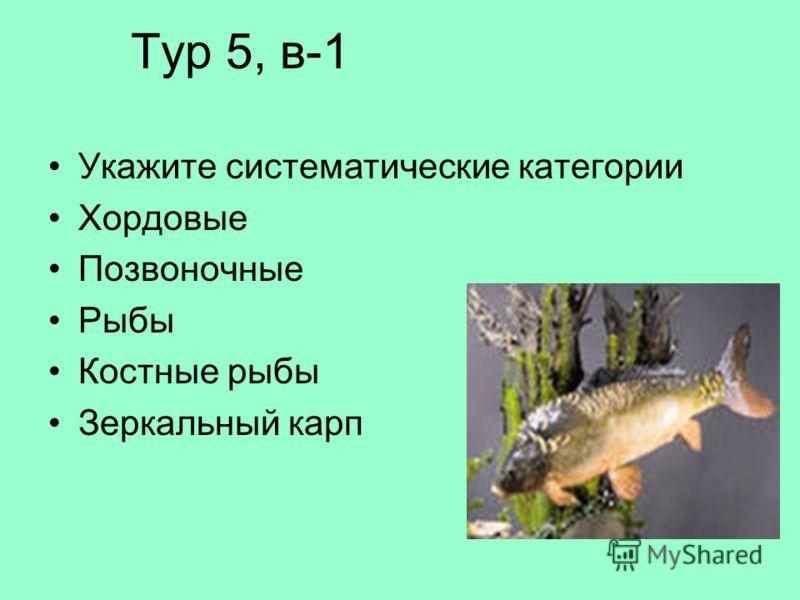 Тур 5, в-1 Укажите систематические категории Хордовые Позвоночные Рыбы Костные рыбы Зеркальный карп
