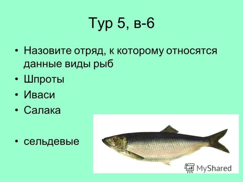 Тур 5, в-6 Назовите отряд, к которому относятся данные виды рыб Шпроты Иваси Салака сельдевые