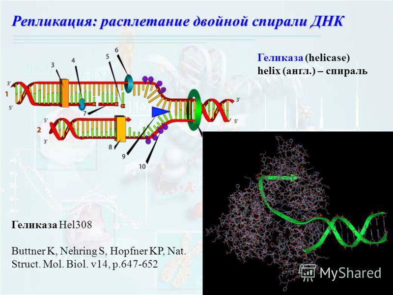 Геликаза (helicase) helix (англ.) – спираль Геликаза Hel308 Buttner K, Nehring S, Hopfner KP, Nat. Struct. Mol. Biol. v14, p.647-652 Репликация: расплетание двойной спирали ДНК