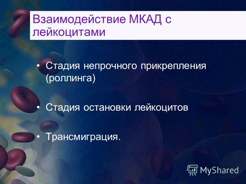 Взаимодействие МКАД с лейкоцитами Стадия непрочного прикрепления (роллинга) Стадия остановки лейкоцитов Трансмиграция.