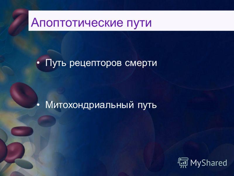 Апоптотические пути Путь рецепторов смерти Митохондриальный путь