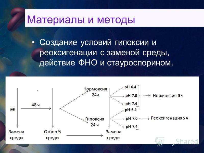 Создание условий гипоксии и реоксигенации с заменой среды, действие ФНО и стауроспорином.