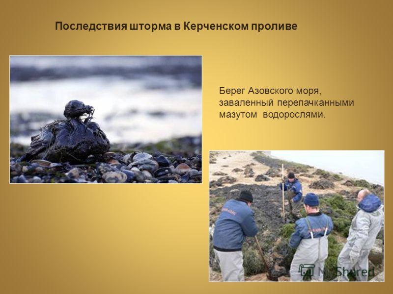 Последствия шторма в Керченском проливе Берег Азовского моря, заваленный перепачканными мазутом водорослями.