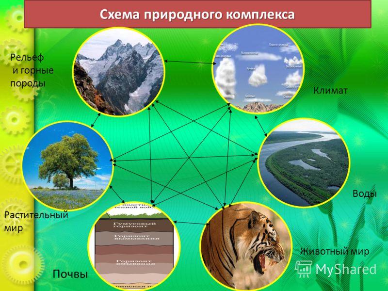 Схема природного комплекса Климат Воды Животный мир Почвы Растительный мир Рельеф и горные породы