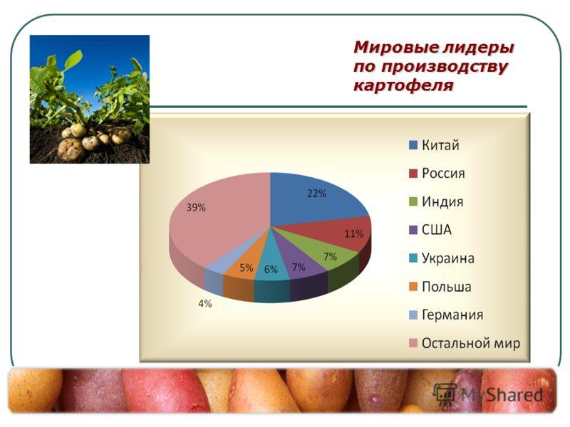Мировые лидеры по производству картофеля