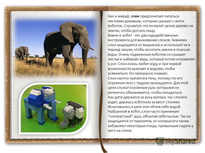 Как и жираф, слон предпочитает питаться листьями деревьев, которые срывает с веток хоботом. Случается, что он валит целое дерево на землю, чтобы достать пищу. Бивни и хобот - это два чудодейственных инструмента для выживания слонов. Бивнями слон защи