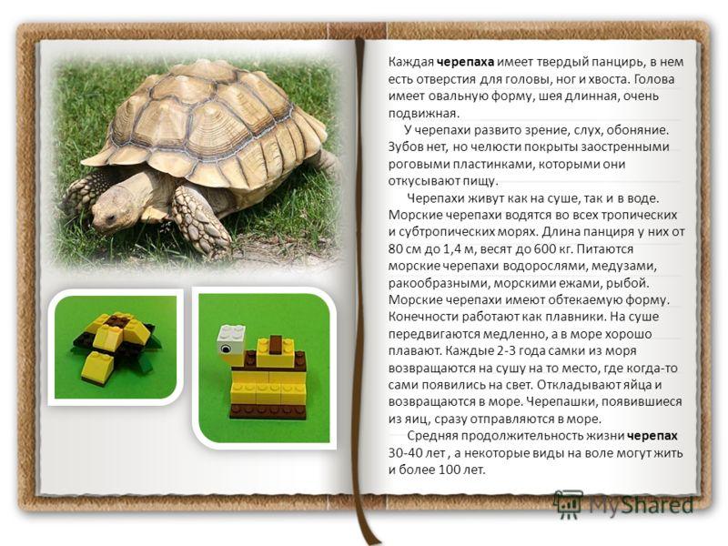 Каждая черепаха имеет твердый панцирь, в нем есть отверстия для головы, ног и хвоста. Голова имеет овальную форму, шея длинная, очень подвижная. У черепахи развито зрение, слух, обоняние. Зубов нет, но челюсти покрыты заостренными роговыми пластинкам
