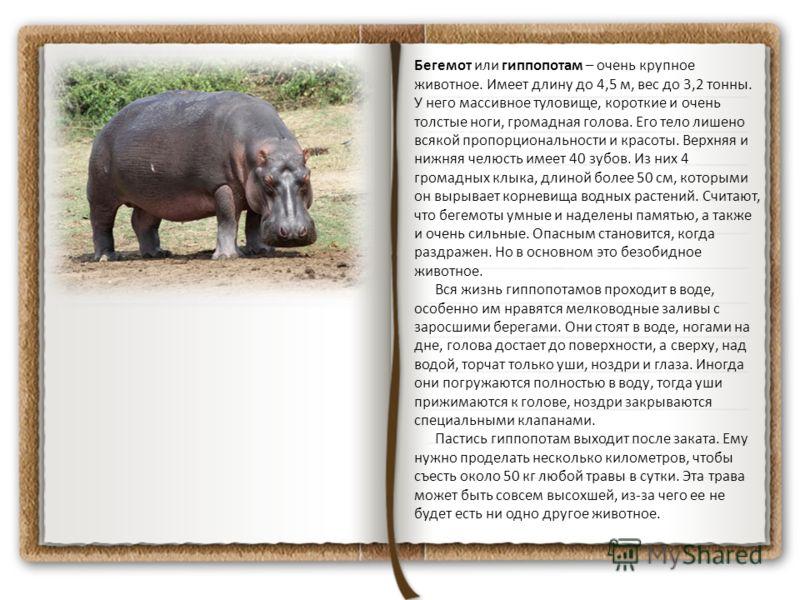 Бегемот или гиппопотам – очень крупное животное. Имеет длину до 4,5 м, вес до 3,2 тонны. У него массивное туловище, короткие и очень толстые ноги, громадная голова. Его тело лишено всякой пропорциональности и красоты. Верхняя и нижняя челюсть имеет 4