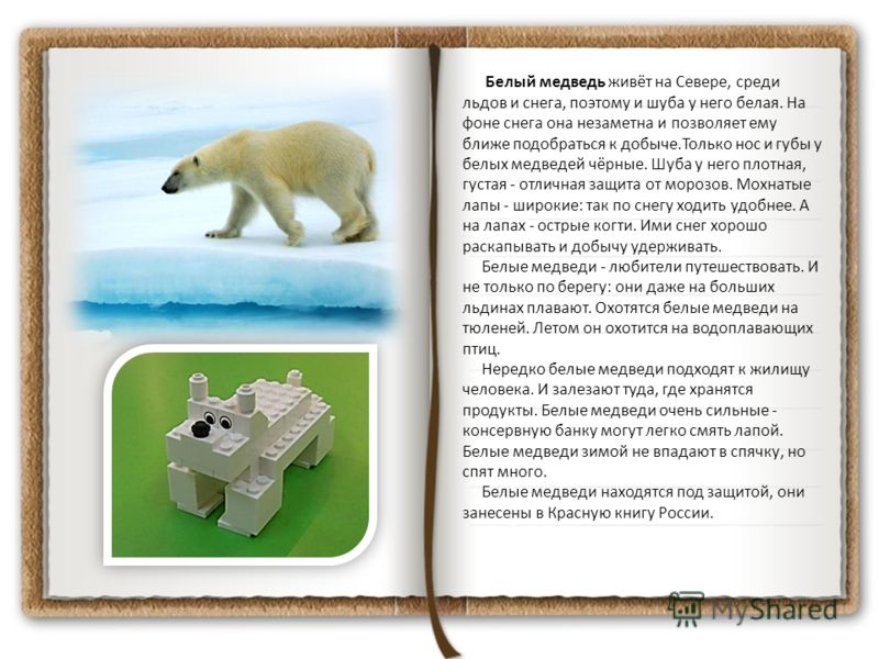 Белый медведь живёт на Севере, среди льдов и снега, поэтому и шуба у него белая. На фоне снега она незаметна и позволяет ему ближе подобраться к добыче.Только нос и губы у белых медведей чёрные. Шуба у него плотная, густая - отличная защита от морозо