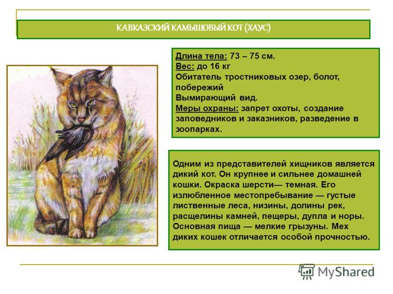 Одним из представителей хищников является дикий кот. Он крупнее и сильнее домашней кошки. Окраска шерсти темная. Его излюбленное местопребывание густые лиственные леса, низины, долины рек, расщелины камней, пещеры, дупла и норы. Основная пища мелкие