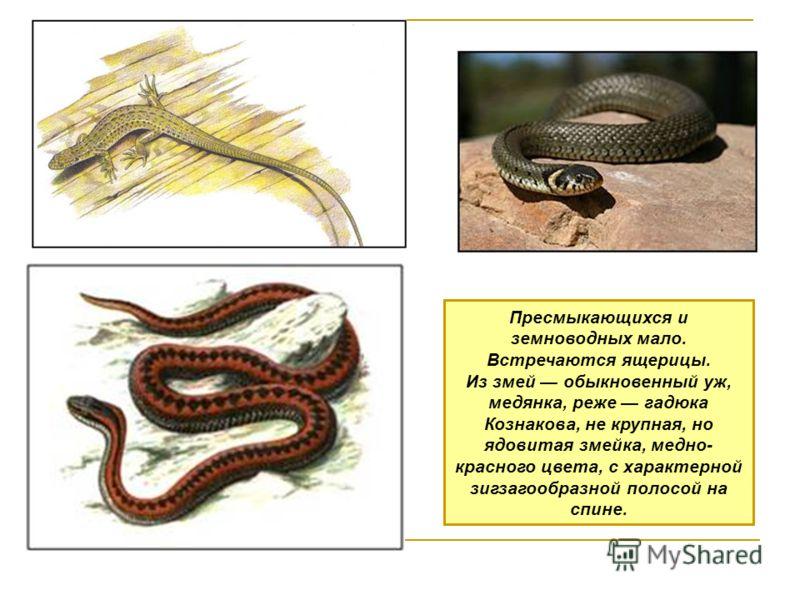 Пресмыкающихся и земноводных мало. Встречаются ящерицы. Из змей обыкновенный уж, медянка, реже гадюка Кознакова, не крупная, но ядовитая змейка, медно- красного цвета, с характерной зигзагообразной полосой на спине.