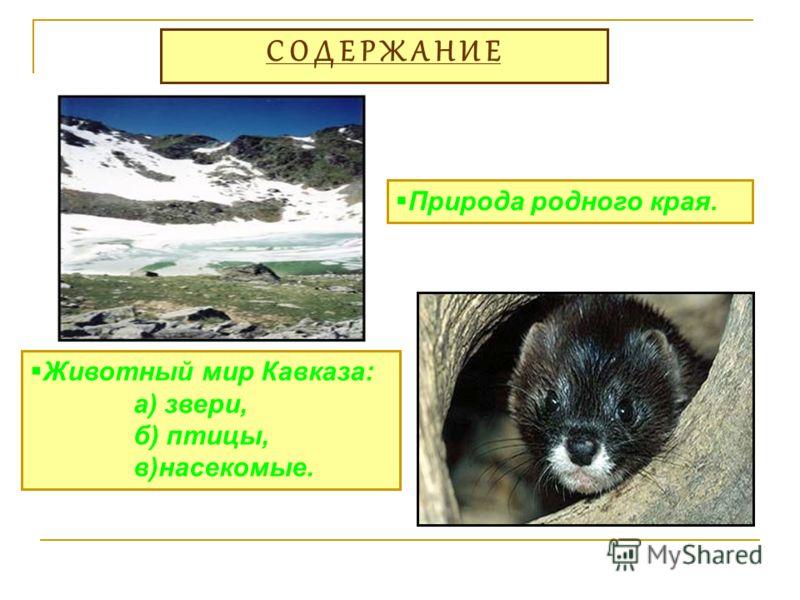 С О Д Е Р Ж А Н И Е Природа родного края. Животный мир Кавказа: а) звери, б) птицы, в)насекомые.