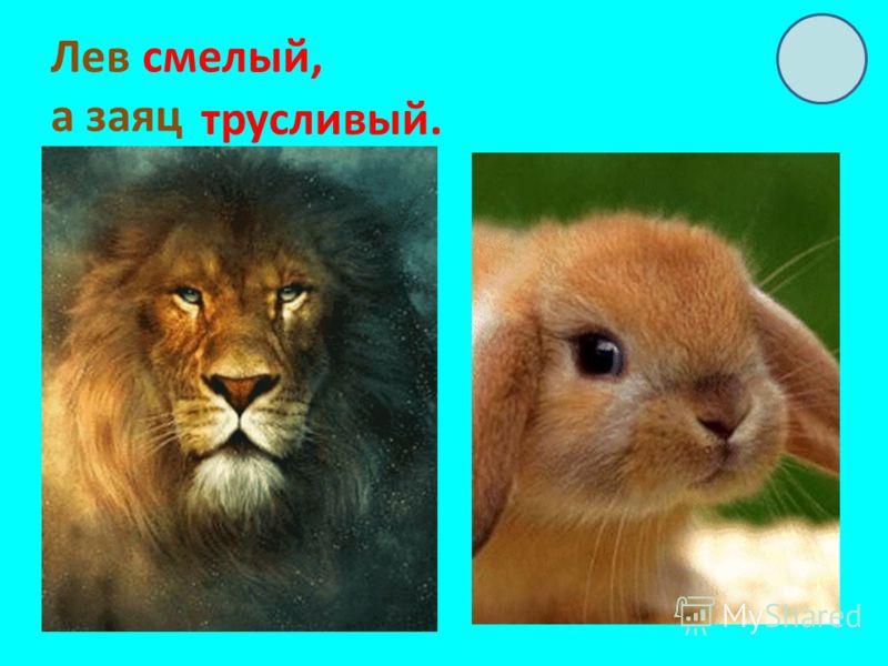 Лев смелый, а заяц трусливый.