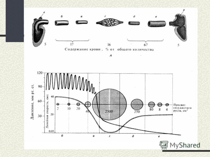 ЛИНЕЙНАЯ СКОРОСТЬ V- линейная скорость меняется по ходу кровеносного русла, и зависит, в основном, от площади поперечного сечения сосудов V = Q /πr 2