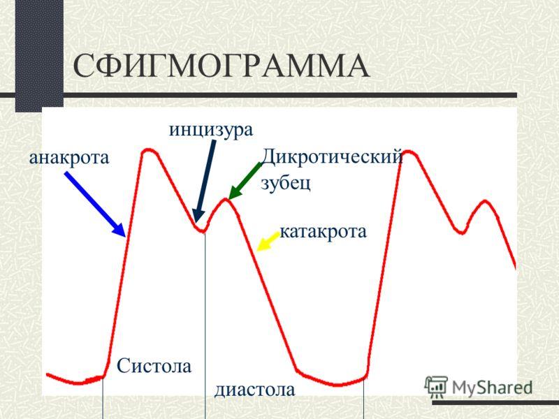 Сфигмография Пульс – это ударная волна, вызываемая систолическим выбросом и распространяющаяся по стенке сосуда. Метод регистрации пульсовой волны - сфигмография