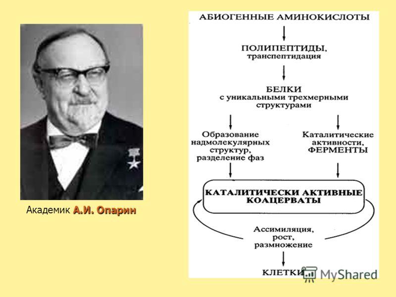 А.И. Опарин Академик А.И. Опарин