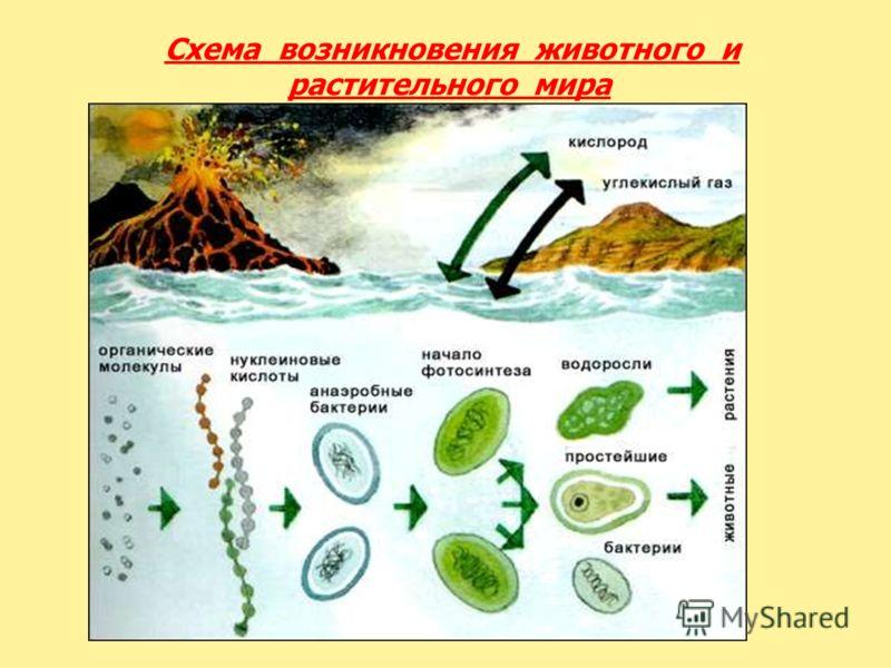 Схема возникновения животного и растительного мира