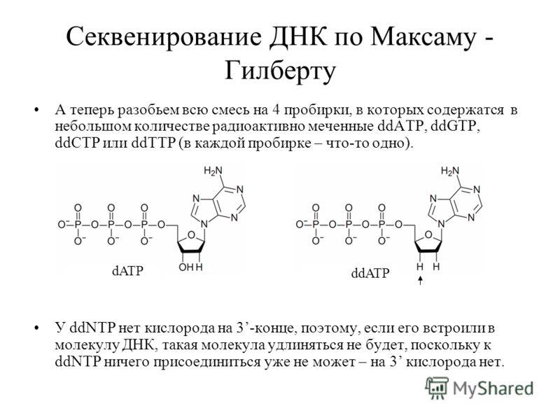 Секвенирование ДНК по Максаму - Гилберту А теперь разобьем всю смесь на 4 пробирки, в которых содержатся в небольшом количестве радиоактивно меченные ddATP, ddGTP, ddCTP или ddTTP (в каждой пробирке – что-то одно). У ddNTP нет кислорода на 3-конце, п