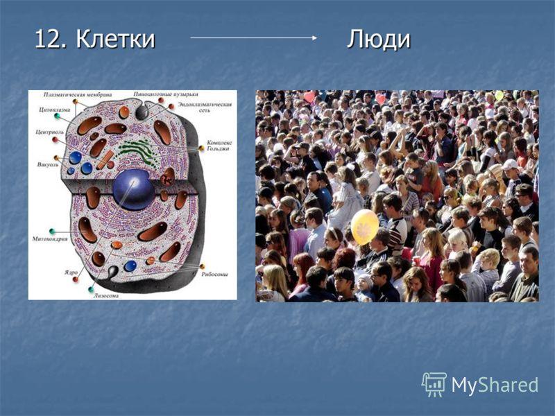 12. Клетки Люди