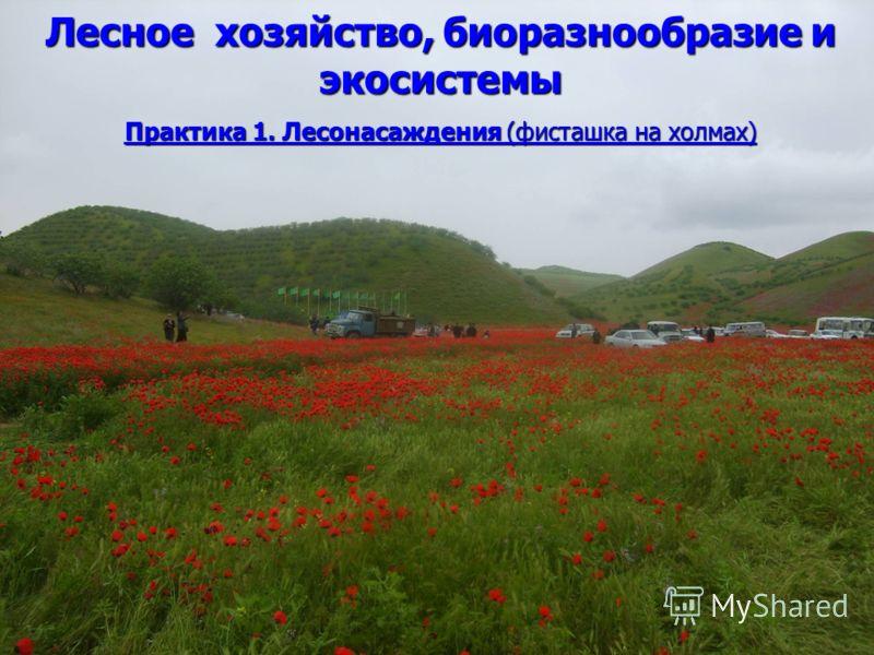 Лесное хозяйство, биоразнообразие и экосистемы Практика 1. Лесонасаждения (фисташка на холмах)