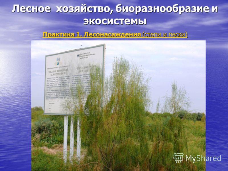 Лесное хозяйство, биоразнообразие и экосистемы Практика 1. Лесонасаждения (степи и пески)