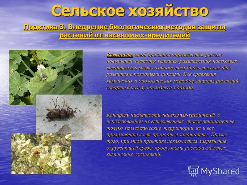 Сельское хозяйство Практика 3. Внедрение биологических методов защиты растений от насекомых-вредителей Важность этой практики определяется риском повышения частоты вспышек размножения насекомых вредителей в связи с совпадением биологических фаз разви
