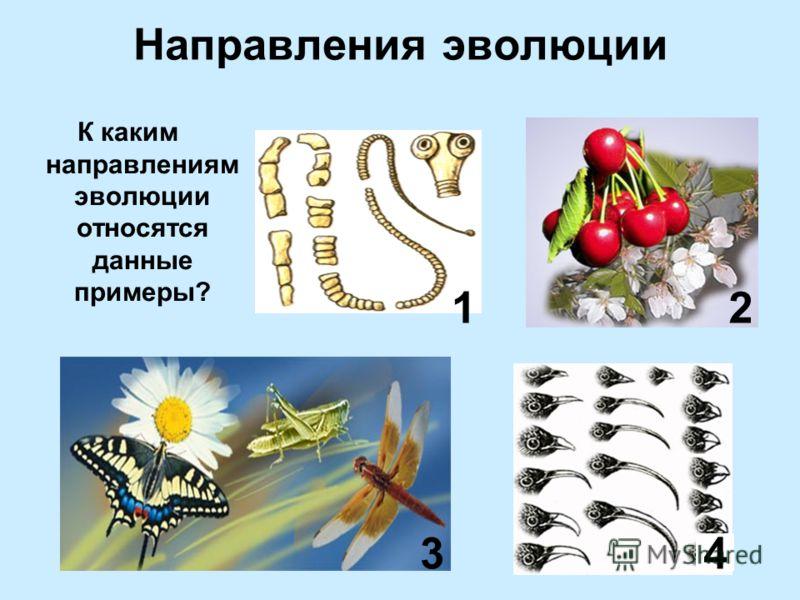 Направления эволюции К каким направлениям эволюции относятся данные примеры? 1 34 2