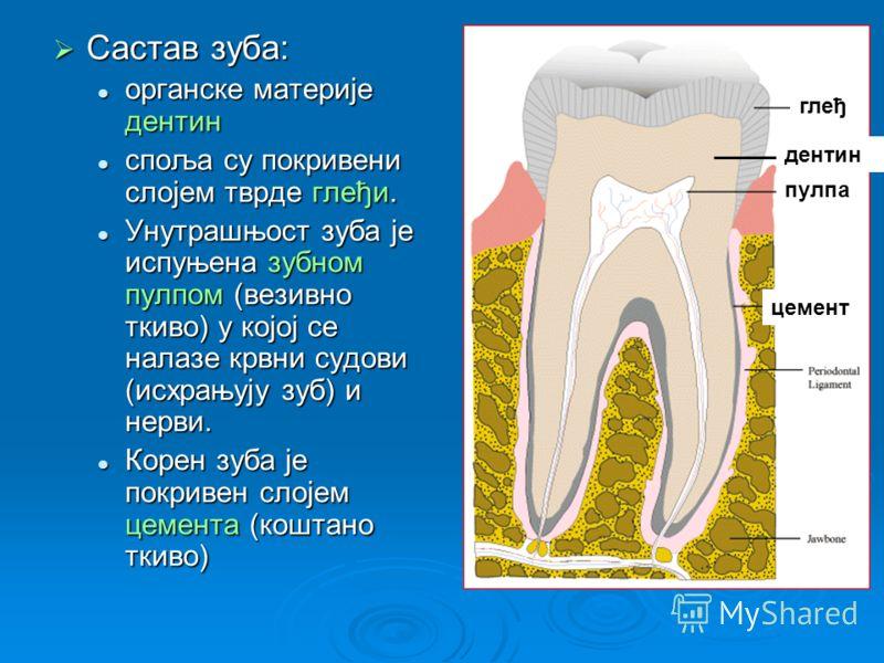 Састав зуба: Састав зуба: органске материје дентин органске материје дентин споља су покривени слојем тврде глеђи. споља су покривени слојем тврде глеђи. Унутрашњост зуба је испуњена зубном пулпом (везивно ткиво) у којој се налазе крвни судови (исхра
