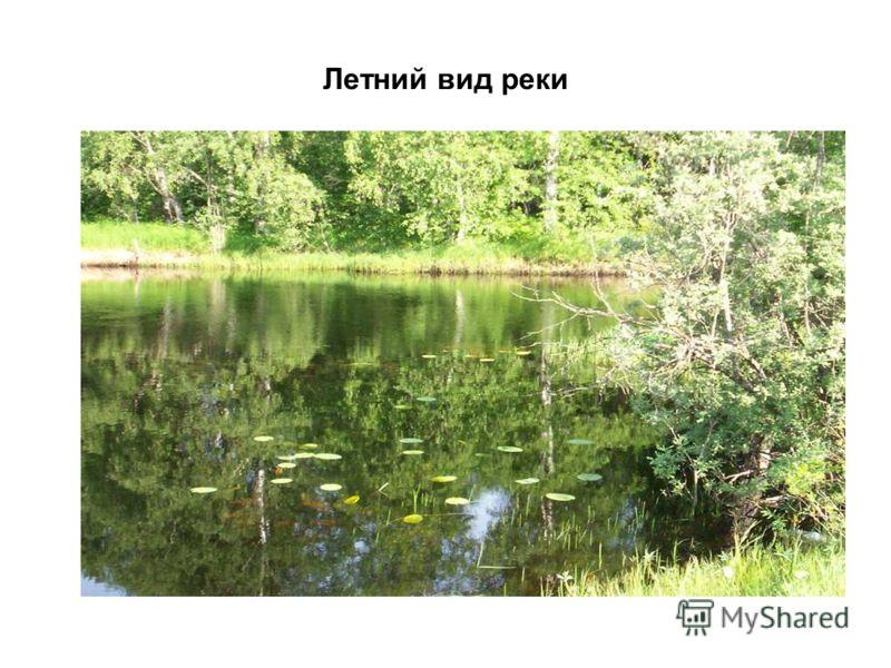 Летний вид реки