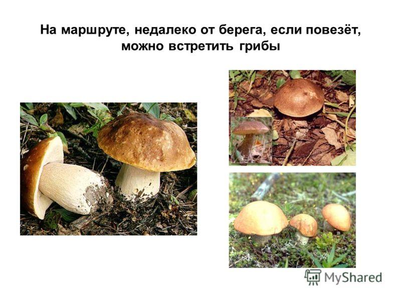 На маршруте, недалеко от берега, если повезёт, можно встретить грибы