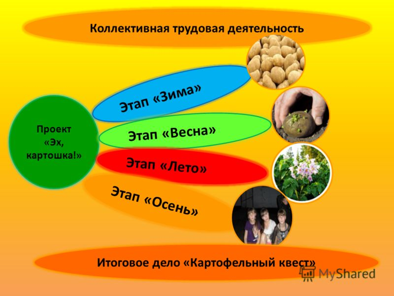 Коллективная трудовая деятельность Проект «Эх, картошка!» Этап «Зима» Этап «Весна» Этап «Лето» Этап «Осень» Итоговое дело «Картофельный квест»